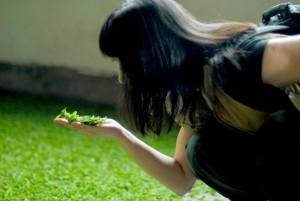 A propos de nous, Les Feuilles Vertes