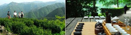 Départ 2011 dans les jardins du thé