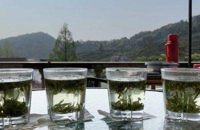 4 thés verts de Chine